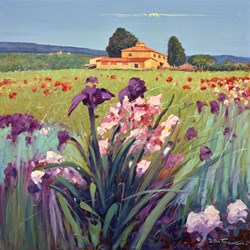 Fiore Viola e Rosso II by Bruno Tinucci -  sized 39x39 inches. Available from Whitewall Galleries